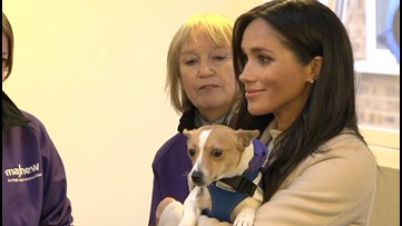 Meghan Markle Has Been Secretly Helping an Animal Shelter