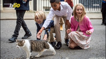 Children Attempt to Pet the Famous Larry the Cat Outside of