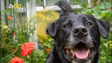 This Dog and Bird Have an Unlikely (and Adorable) Friendship
