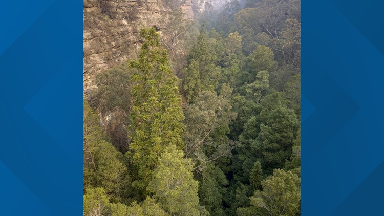 Australia Dinosaur Trees AP January