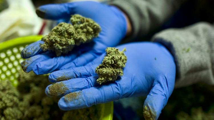 Pot legalization bills introduced in Congress