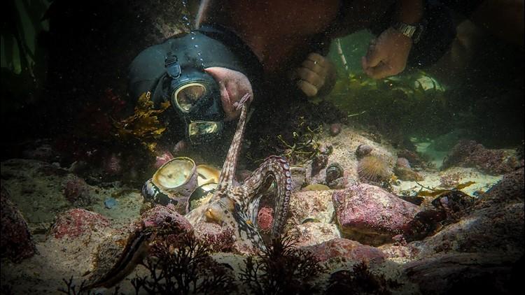 'My Octopus Teacher' wins the Oscar for best documentary