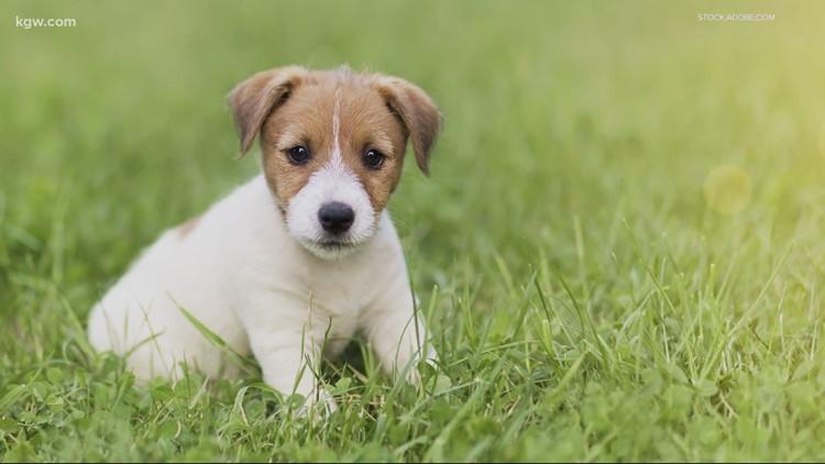 Arkadelphia men who pocketed $160k in puppy scam sued by Leslie Rutledge