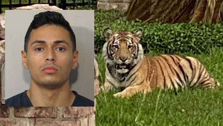 'It's not his tiger'   Lawyer for man at center of tiger investigation says HPD rushed to judgment