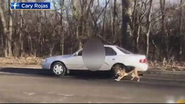 Dog being dragged on leash by man inside car caught on tape