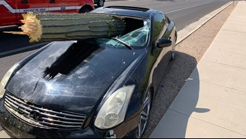 Arizona driver goes to head-to-head with cactus, cactus wins