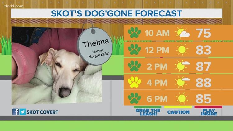 Thelma | Skot's dog'gone forecast