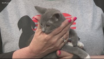 Pet of the Week | Twilight