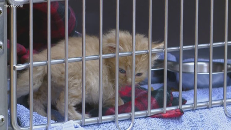 Bryant Animal Control needs help warming pets
