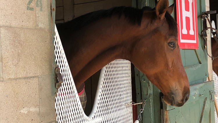First day of training brings excitement and anticipation to Oaklawn