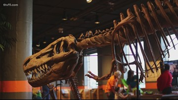 Dinosaur exhibit at Museum of Discovery