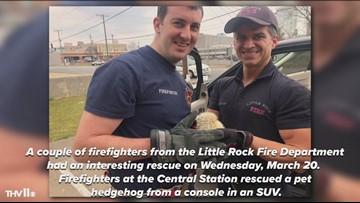 Little Rock firefighters rescue pet hedgehog tapped in car
