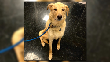 'He's very well-behaved,' lovable Bentley needs a home!
