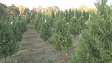 Tree farmers say lots of people want Christmas trees in the beginning of November