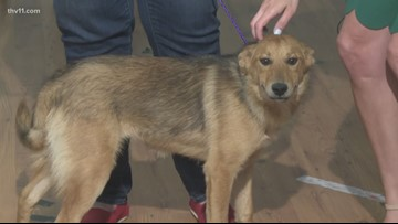 Pet of the Week | Ginger