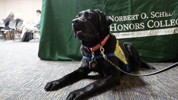 University of Central Arkansas organization trains future service dogs