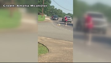 Man stops traffic in North Little Rock to help mom, ducklings cross the road