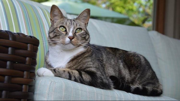 Joey the Garden Cat [2007-2014] KTHV