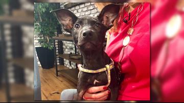 'My little bat dog,' adorable Matilda needs a home!