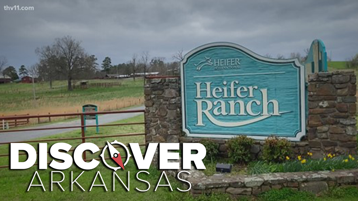 Heifer Ranch   Discover Arkansas