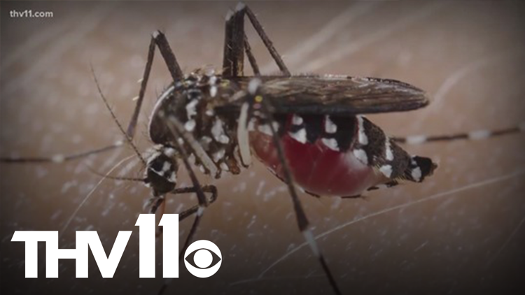 Why mosquitoes bite some more than others