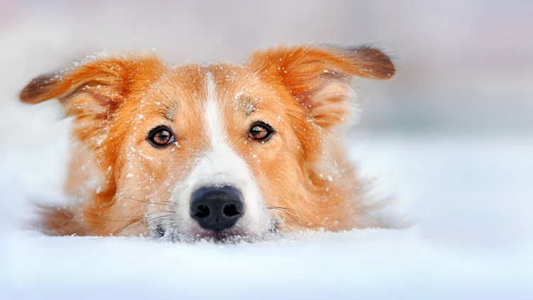 Important tips to keep your pet safe from the bitter cold