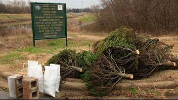 Donate your Christmas tree and give it a second life as a fish habitat
