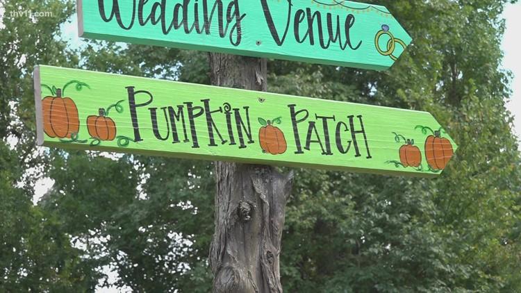 BoBrook farms gearing up for Arkansas pumpkin picking season