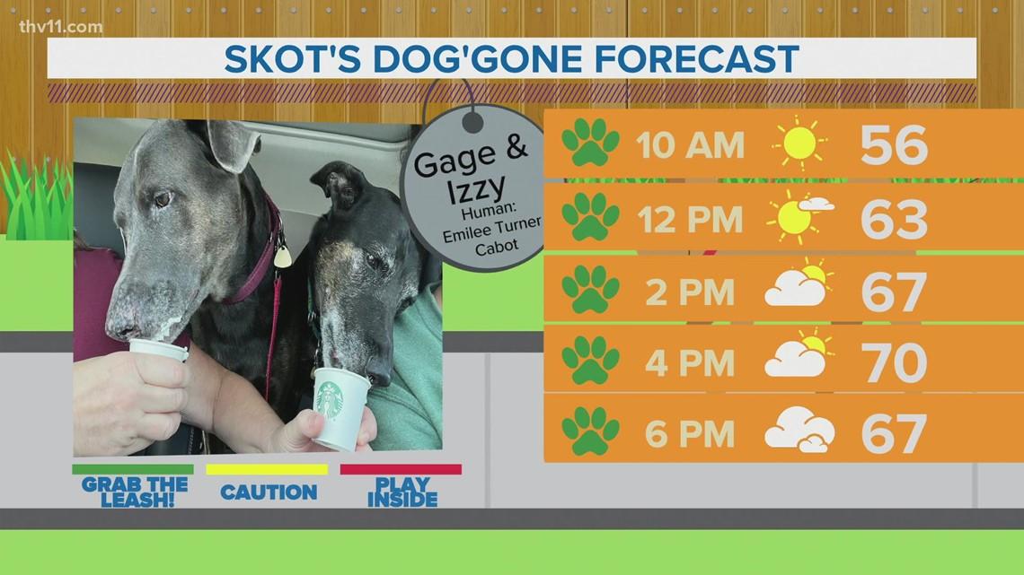 Gage & Izzy | Skot's dog'gone forecast