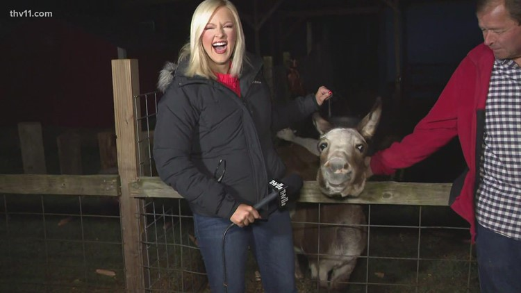 Maggie the donkey is awake and ready for visitors at Motley's