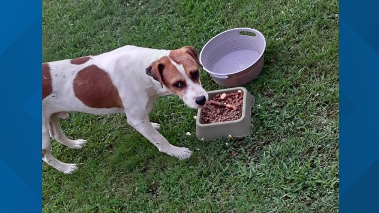 Arkansas woman looking for a home for stray dog she's been trying to befriend for 3 years