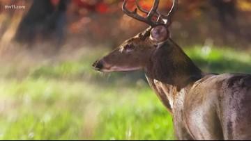 Arkansas Wildlife 2019-2020 calendar now available