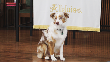 Church spreading unconditional love in new ways through therapy dog team