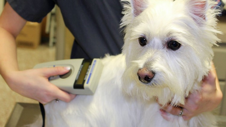 $15 Microchipping for dogs, cats to be held at Bass Pro Shops June 12