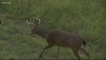Chronic Wasting Disease: Things to know