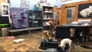 1 dog drowns at Arkadelphia humane society, shelter needing donations