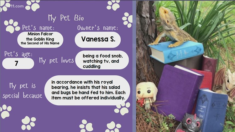 CALS hosts virtual pet parade to celebrate your animal friends