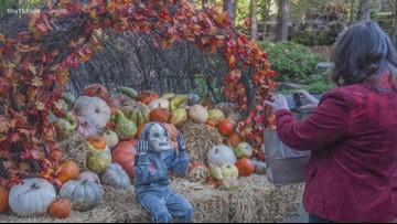 Celebrate fall with Garvan Woodland Gardens!