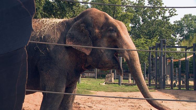 Little Rock Zoo celebrates Zina the Elephant's 61st birthday