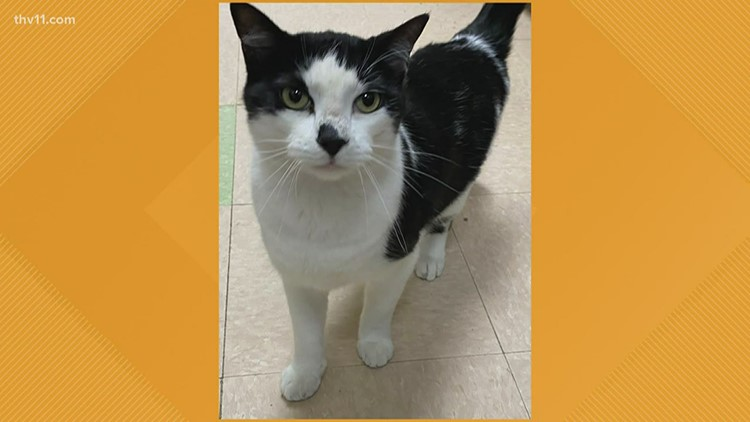 Pet of the Week: Blizzard