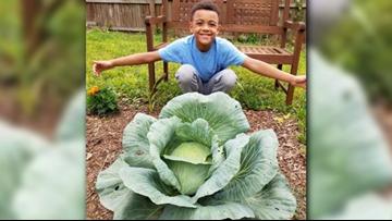 Gibbs Magnet Elementary 3rd grader wins 'best in state' cabbage award