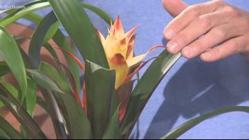 Exotic but low maintenance Bromeliads!