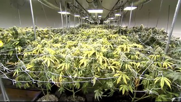 Approved medical marijuana dispensaries begin construction, others wait for licenses