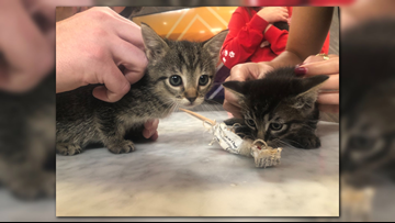 'The Addam's Family' three precious kittens need forever homes