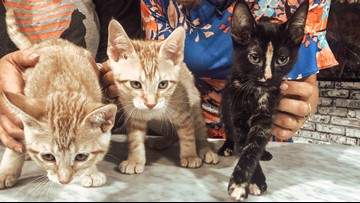 3 super sweet, friendly kittens need help finding homes & new names