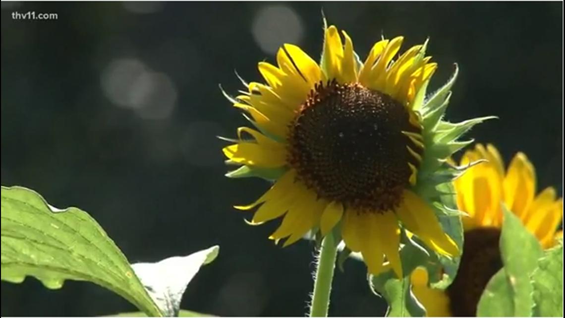 Arkansas Heart Hospital opens garden to promote healthy living