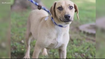 Dog adoptions needed in Bald Knob
