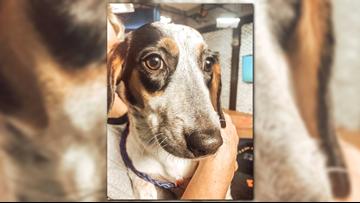 Bailey, Bailey, Bailey! | Pet of the Week