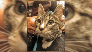 It's cold, so grab your Socks! | Pet of the Week