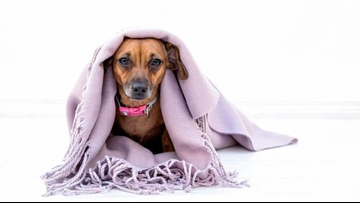 Help keep our furry, shelter friends warm with the Little Rock Animal Village blanket drive